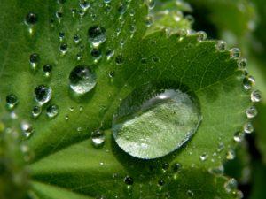 Närbild på grönt löv med droppar av dagg